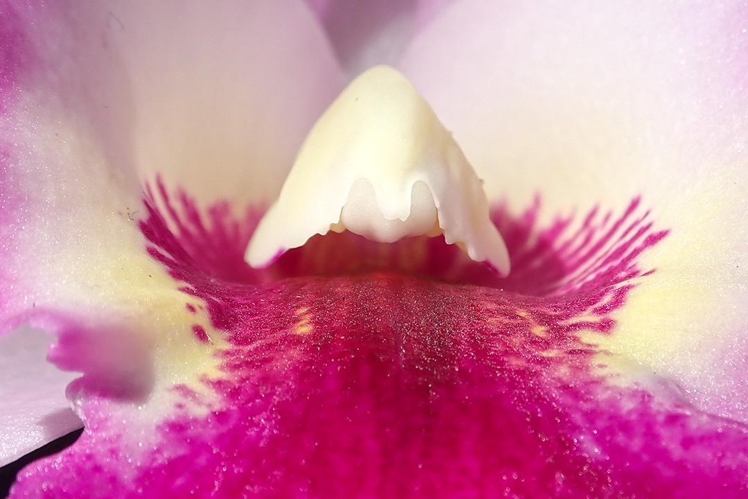 Orchid Macro 7941
