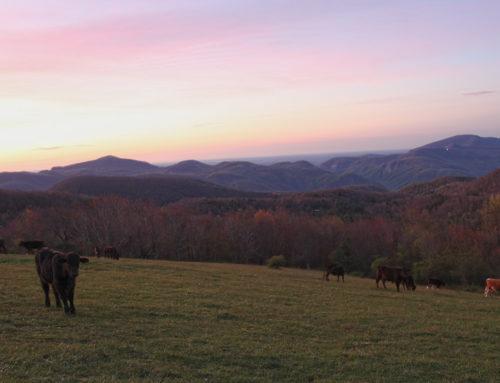 Sunrise on Little Pisgah