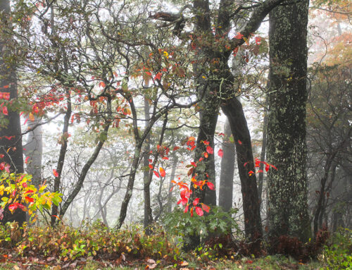 The End of Fall – Blue Ridge Parkway