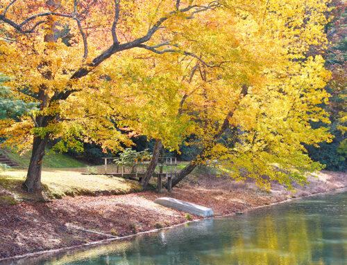 Rainbow Lake – Laurel Park