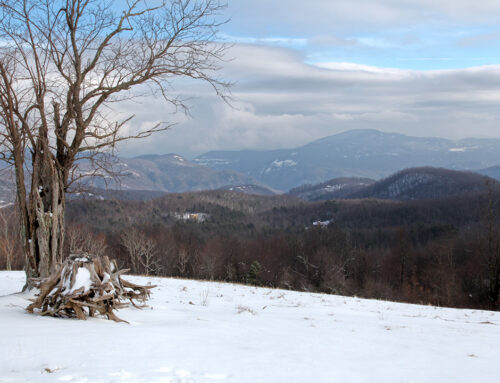 Snow on Little Pisgah
