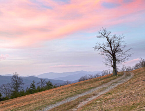 Little Pisgah – Laughter Mountain Road