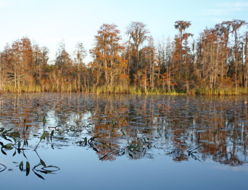 Okefenokee Swamp – Suwannee Canal