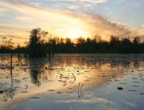 Okefenokee Swamp – Chesser Prairie Sunset